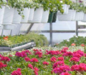 rhodes-greenhouses-garden-center-1
