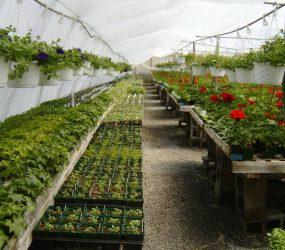 rhodes-greenhouses-garden-center-16