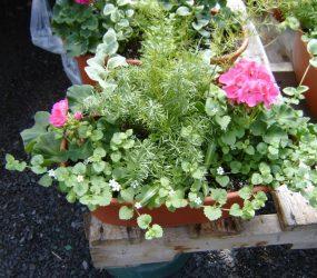 rhodes-greenhouses-garden-center-18