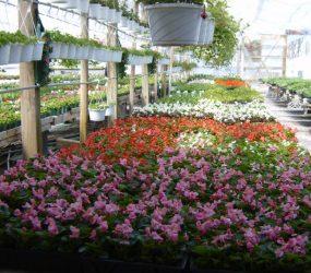 rhodes-greenhouses-garden-center-19