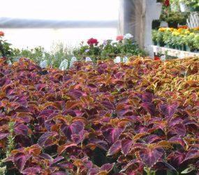 rhodes-greenhouses-garden-center-21