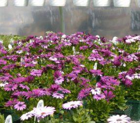 rhodes-greenhouses-garden-center-23
