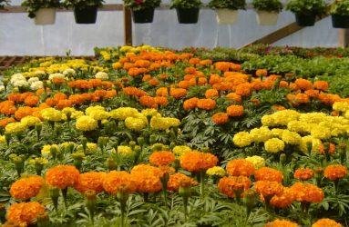 rhodes-greenhouses-garden-center-27