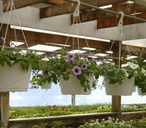 rhodes-greenhouses-garden-center-32