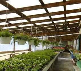 rhodes-greenhouses-garden-center-33