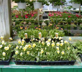 rhodes-greenhouses-garden-center-34