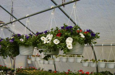 rhodes-greenhouses-garden-center-35