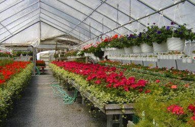 rhodes-greenhouses-garden-center-36