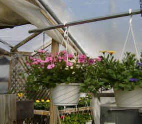 rhodes-greenhouses-garden-center-37