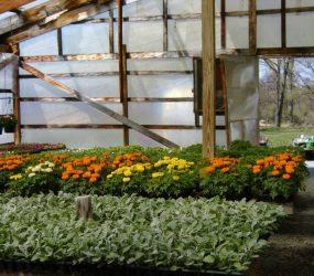 rhodes-greenhouses-garden-center-38
