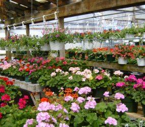 rhodes-greenhouses-garden-center-39