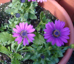 rhodes-greenhouses-garden-center-4