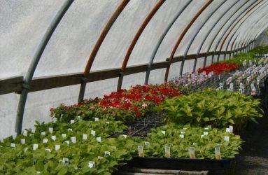 rhodes-greenhouses-garden-center-41