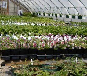 rhodes-greenhouses-garden-center-42