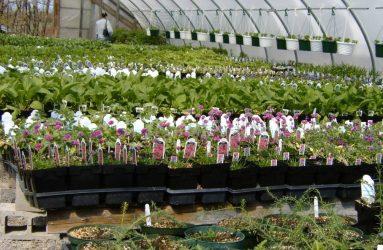 rhodes-greenhouses-garden-center-43