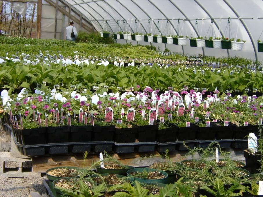 Rhodes Greenhouses Garden Center 43
