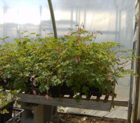 rhodes-greenhouses-garden-center-44