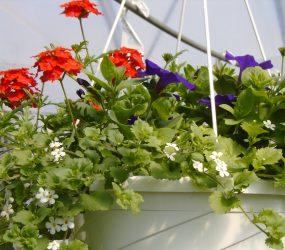 rhodes-greenhouses-garden-center-5