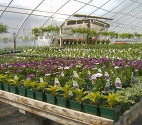 rhodes-greenhouses-garden-center-51