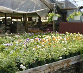 rhodes-greenhouses-garden-center-52