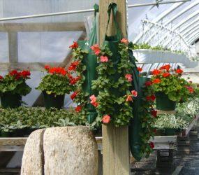 rhodes-greenhouses-garden-center-53