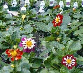 rhodes-greenhouses-garden-center-55
