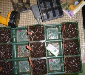 rhodes-greenhouses-garden-center-56