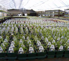 rhodes-greenhouses-garden-center-6