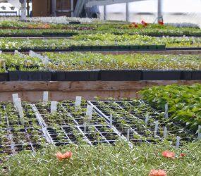 rhodes-greenhouses-garden-center-7