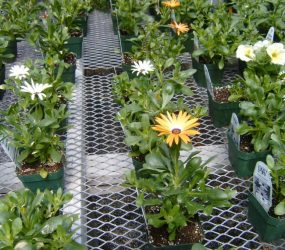 rhodes-greenhouses-garden-center-10