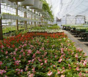 rhodes-greenhouses-garden-center-11