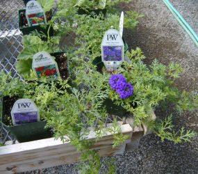 rhodes-greenhouses-garden-center-12