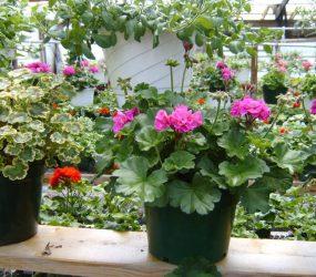 rhodes-greenhouses-garden-center-13