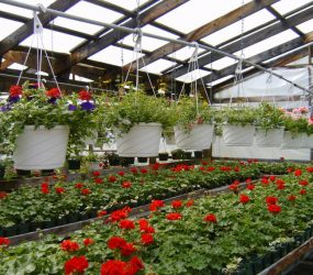 rhodes-greenhouses-garden-center-14