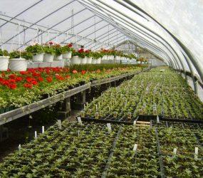 rhodes-greenhouses-garden-center-15