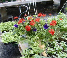 rhodes-greenhouses-garden-center-17