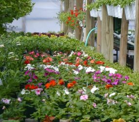 rhodes-greenhouses-garden-center-20