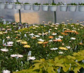 rhodes-greenhouses-garden-center-22