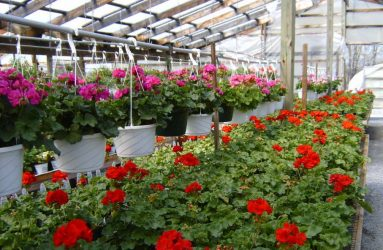 rhodes-greenhouses-garden-center-24