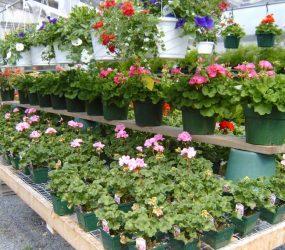 rhodes-greenhouses-garden-center-25