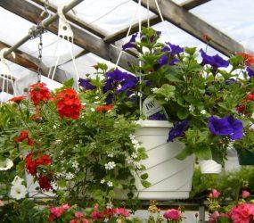 rhodes-greenhouses-garden-center-26
