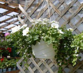 rhodes-greenhouses-garden-center-28