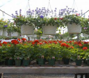 rhodes-greenhouses-garden-center-29