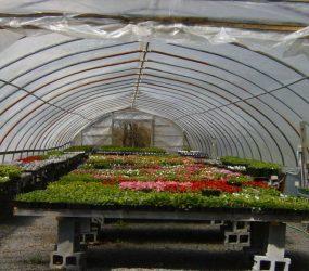 rhodes-greenhouses-garden-center-30