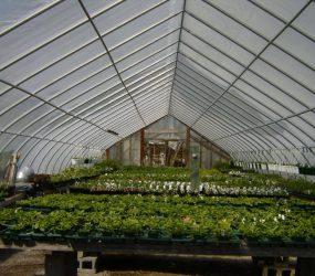 rhodes-greenhouses-garden-center-31