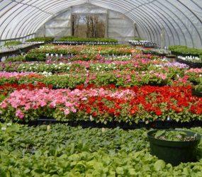 rhodes-greenhouses-garden-center-40