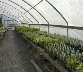 rhodes-greenhouses-garden-center-45