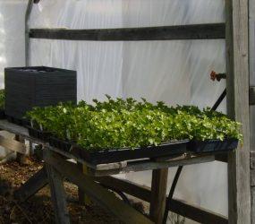 rhodes-greenhouses-garden-center-46