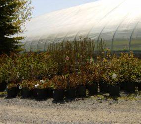 rhodes-greenhouses-garden-center-48