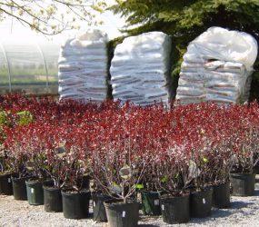 rhodes-greenhouses-garden-center-49